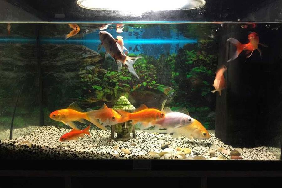北京搬家公司关于鱼缸的搬运注意事项
