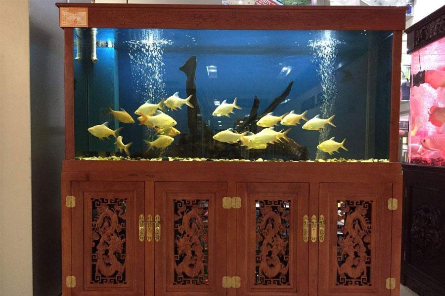 找北京搬家公司搬运鱼缸时四个角要做好保护