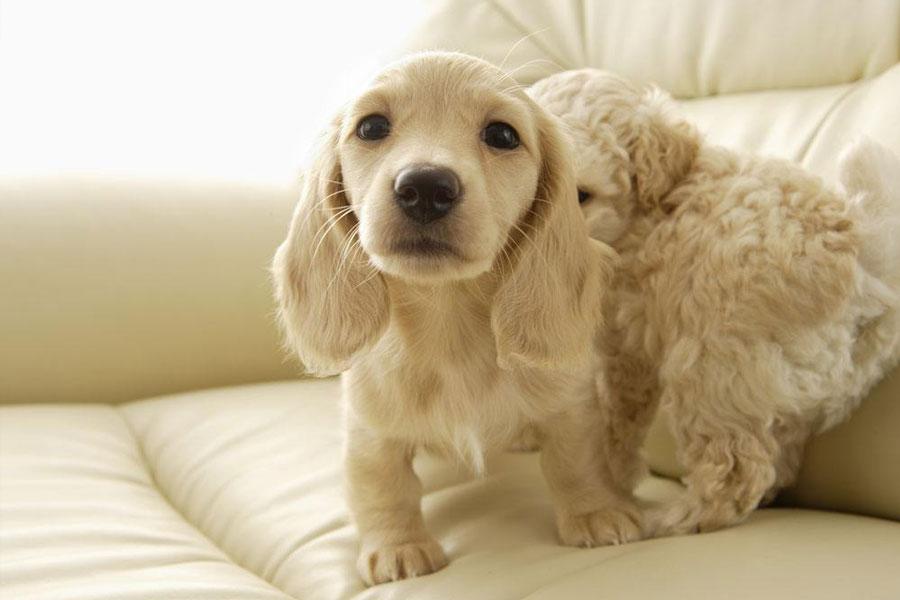 北京顺义搬家公司提醒带着狗狗搬家时要注意的问题