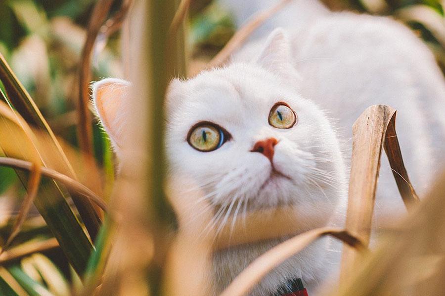 找北京搬家公司搬家时如何保护自家的宠物安全?